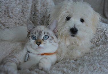 pourquoi-souscrire-a-une-assurance-chat
